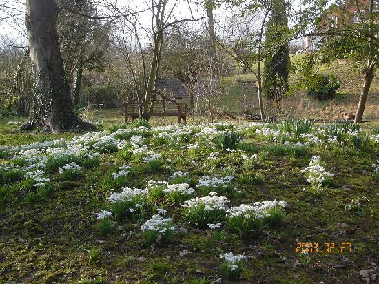 The Hill Cottage: Snowdrops