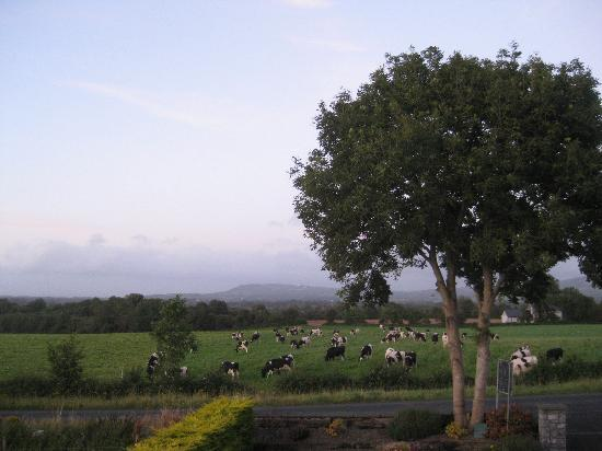 Bunratty Haven Bed and Breakfast: The View!