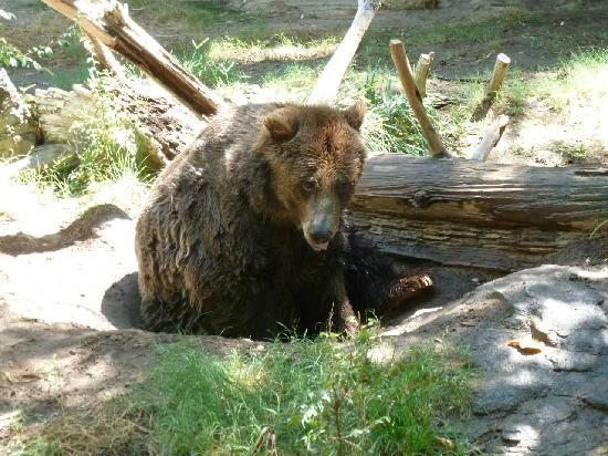 Fresno Chaffee Zoo: Grizzley
