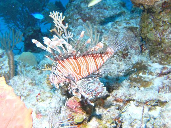 Akumal Dive Shop: Lionfish