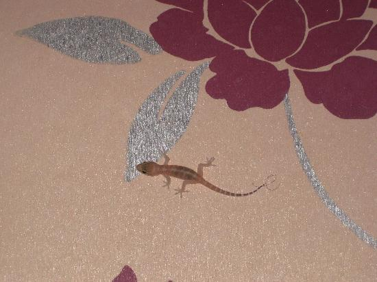 Daisy Hotel Istanbul: Lizard in the room