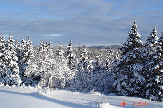 Wildwood Bed & Breakfast: adventurous XC skiing