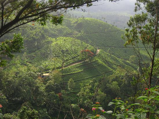 Κοταγιάμ, Ινδία: Munnar Tea Gardens