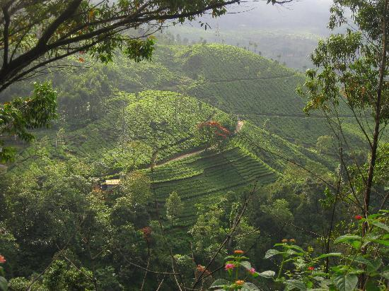 Kottayam, Indien: Munnar Tea Gardens