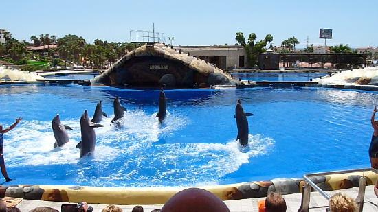 Hotel Villa de Adeje Beach: Dolphin show at Aqualand