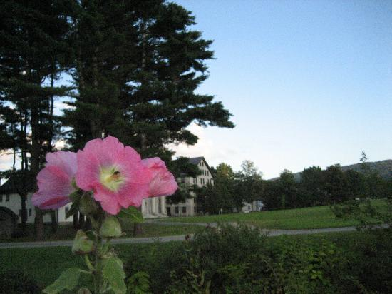 Enfield Shaker Museum: Enfield grounds from organic herb garden