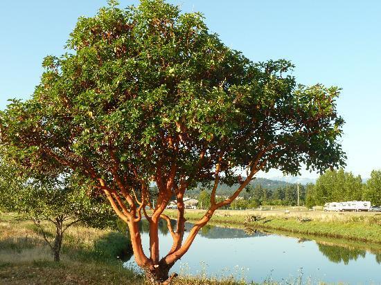 Surfside RV Resort: Unusual Tree