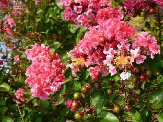 Dulles Golf Center & Sports Park: Flowering bush