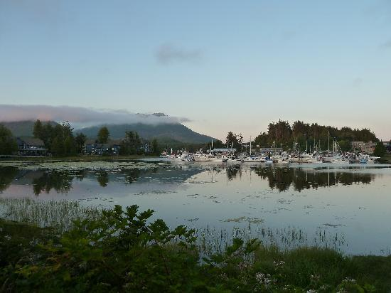 Ucluelet Campground: Evening view from our site
