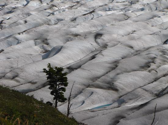 """Glacier Grey: Glaciar Grey desde el Sendero del Circuito """"O"""""""