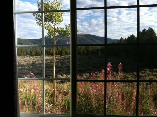 Columbine Inn & Suites: View from rm 101. Even saw hummingbird outside window