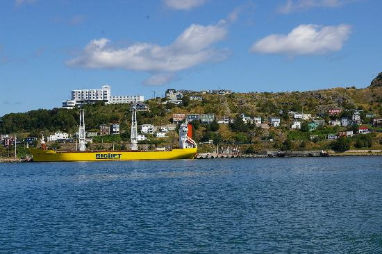 Captain's Quarters: St John's from our whaleless watching boat tour.