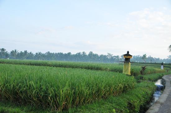 Villa Agung Khalia: Paddy field in front of Villa Khalia