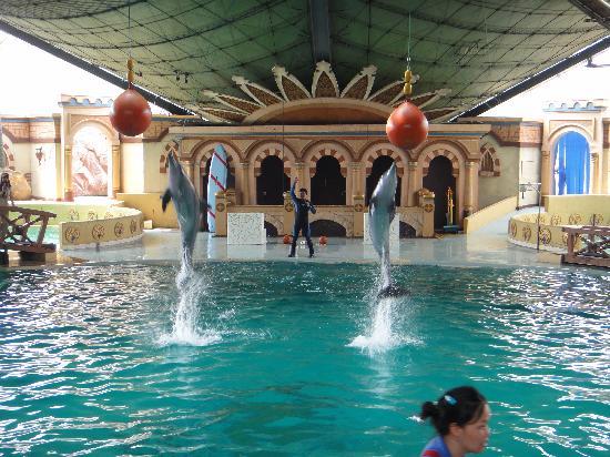 Ancol Dreamland: dolphin show