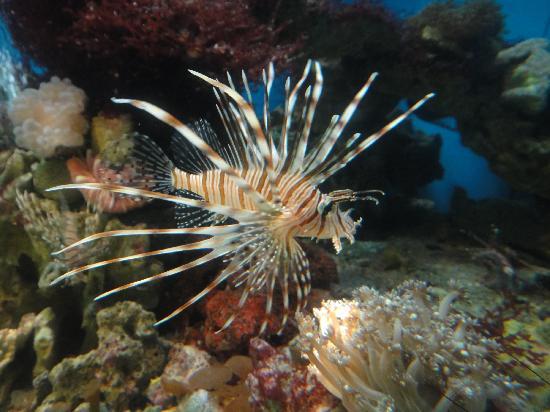 Stone fish in small aquarium picture of ancol dreamland for Stone fish facts