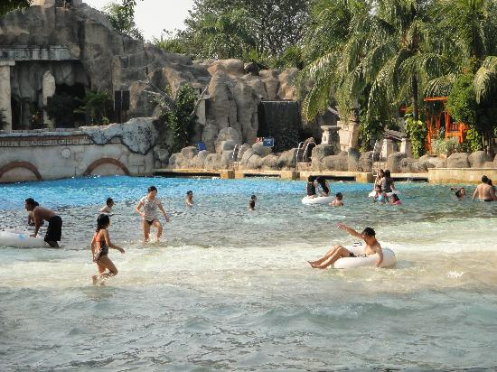Dolphin show picture of ancol dreamland jakarta tripadvisor for Show java pool size