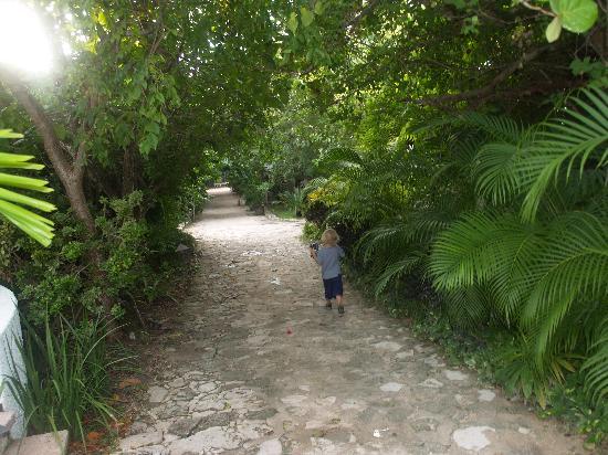Belmond Maroma Resort & Spa: walk to the restaurant through the forest