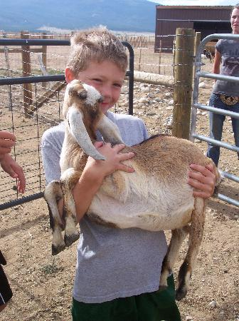 Jumpin' Good Goat Dairy: Holding the Goats - Priceless!