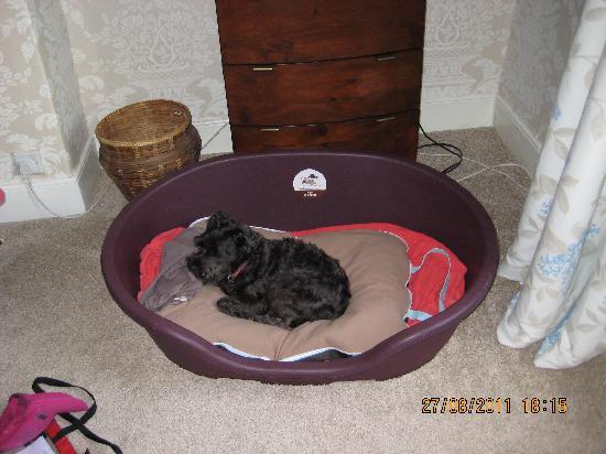 Linden House B&B: King size dog basket-plus schnauzer.