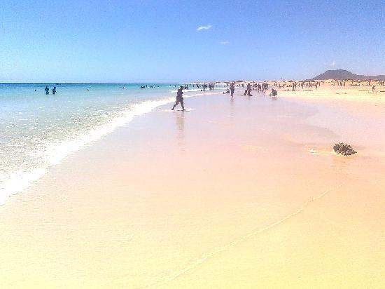 Las Marismas de Corralejo: Beach