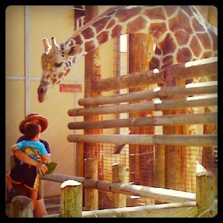 Fresno Chaffee Zoo: Feeding Giraffe!