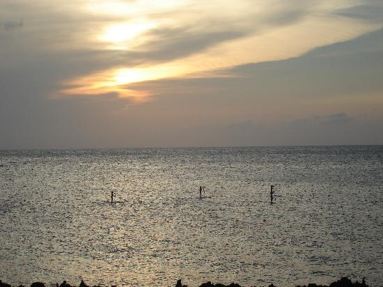 Cocolobo: Paddle boarders coming by at sunset