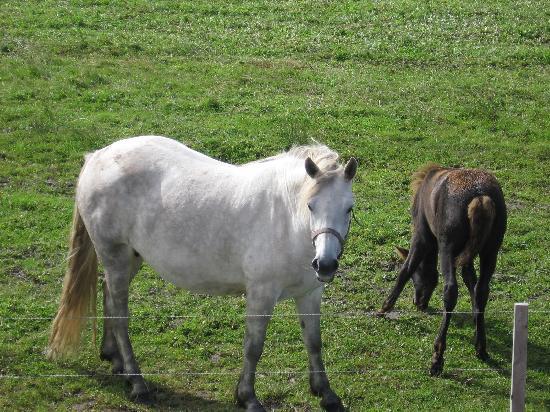 Trildoon House Bed & Breakfast: les chevaux de notre hôte