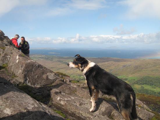 Connemara National Park Hostel: Letterfrack Lodge - nans best friend on Diamond Hill