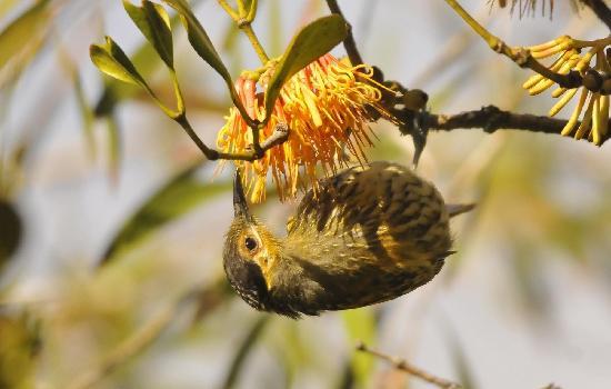 Malanda Falls Caravan Park: lots of bird life