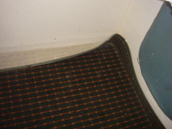 Quality Inn Elkton - St. Augustine South: Carpet comming off