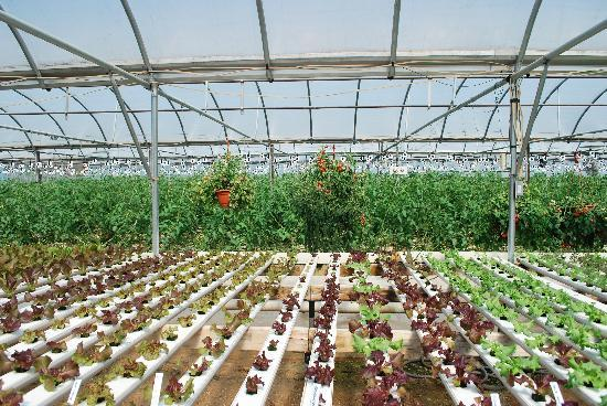 Tasty Morsel Culinary Excursions: the magic of hydroponic farming