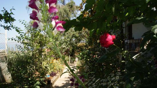Buyukada Ece Pansiyon: bahçemiz
