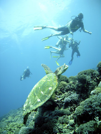 Blue Marlin Dive Gili Trawangan: getlstd_property_photo