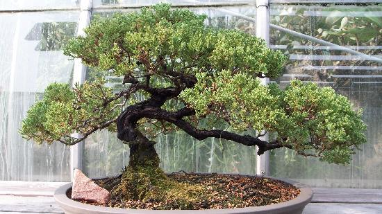 Bonsai Picture Of Krohn Conservatory Cincinnati Tripadvisor