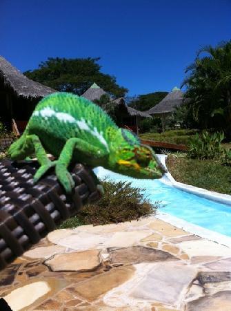 Loharano Hotel : uno dei tantissimi camaleonti