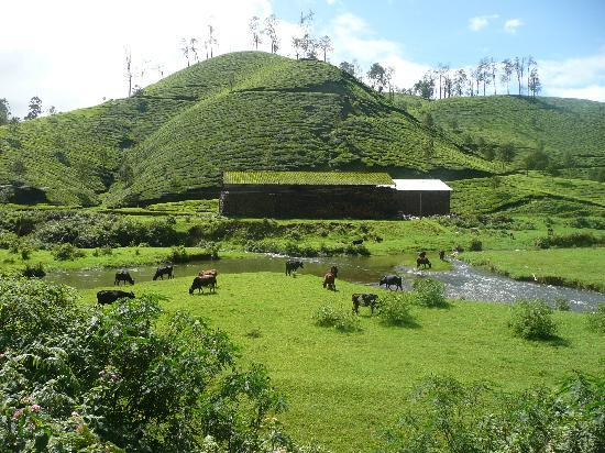 Kaivalyam Retreat: Munnar