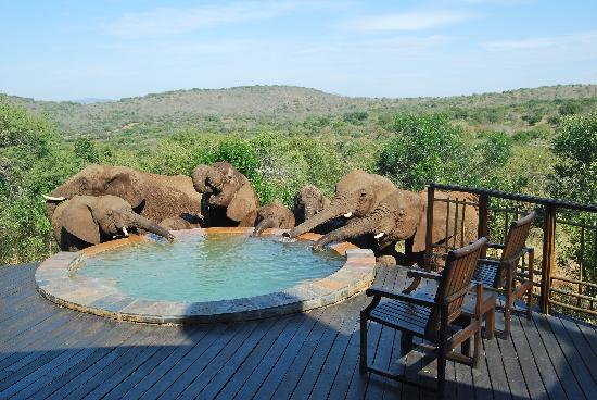 Hluhluwe, Sudáfrica: Elephants at our pool