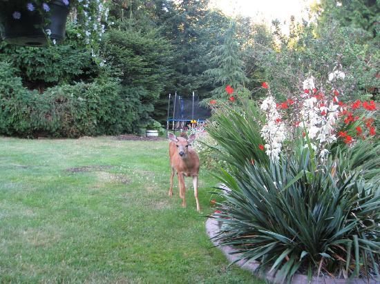 Secret Beach Bed and Breakfast : Deer in the backyard/view from gazebo