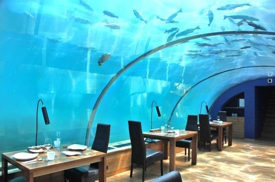 Ithaa underwater restaurant picture of conrad maldives for Ithaa restaurant maldives