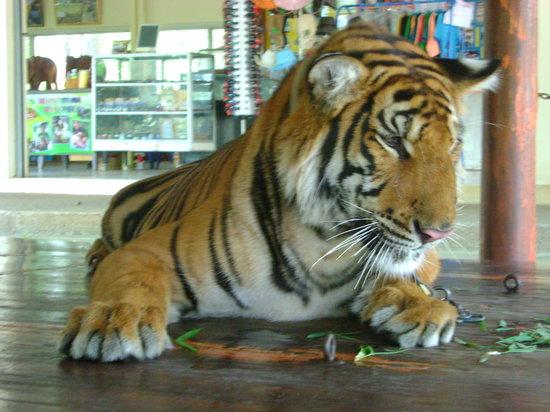Safari Park Open Zoo (Kanchanaburi) - Top Tips Before You Go - TripAdvisor