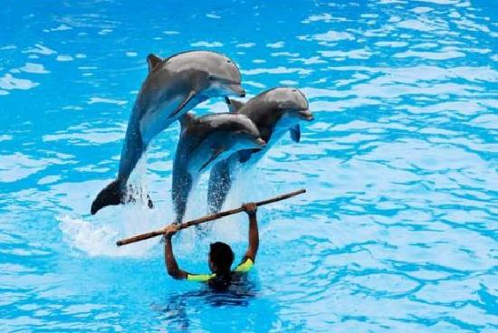VIGOTOUR Day Tours: Dolphin Show