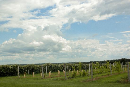Iowa Wine Tours: the grapes around Massbach