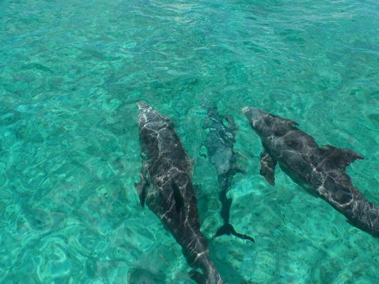 Aquamarine Beach Houses: Dolphins