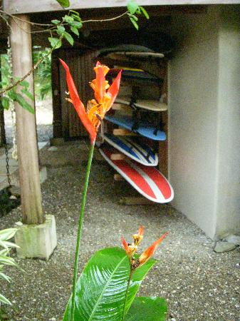 Casa Colina: Surf Boards