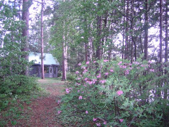 Red Pines Bed & Breakfast: Pinksters on one of many paths