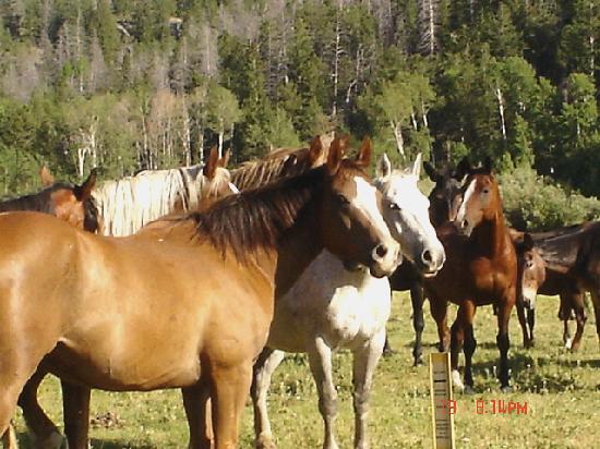 Boulder Lake Lodge: Horses to ride at BLL