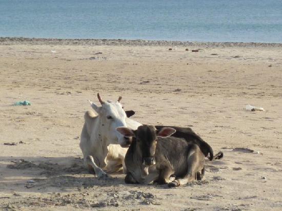 Pigeon Island Beach Resort: alba a Trincomalee