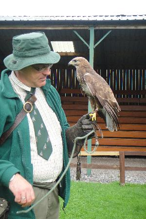 Cheshire Falconry: guide and buzzard