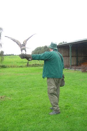 Cheshire Falconry: guide