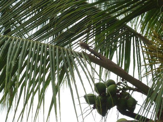 Bahia del Sol Beach Front Hotel & Suites: Un pajarito que cantaba muy lindo